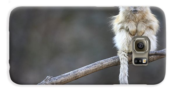 Golden Snub-nosed Monkey Rhinopithecus Galaxy S6 Case by Cyril Ruoso