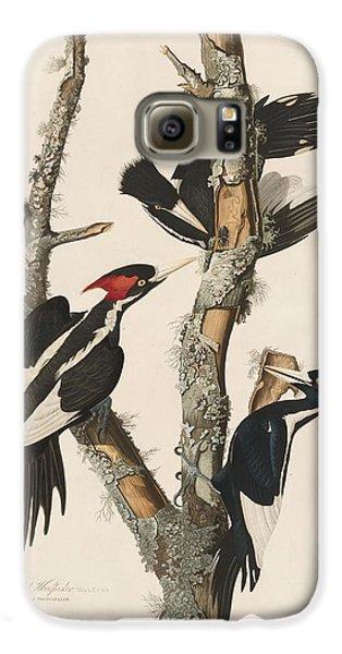 Ivory-billed Woodpecker Galaxy S6 Case by John James Audubon
