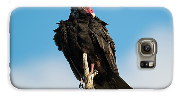 Looking For A Meal Galaxy S6 Case by Mike Dawson