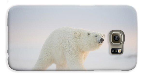 Polar Bear  Ursus Maritimus , Young Galaxy S6 Case by Steven Kazlowski