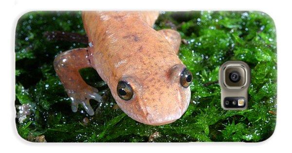 Spring Salamander Galaxy S6 Case by Ted Kinsman