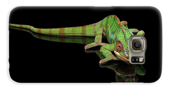 Sneaking Panther Chameleon, Reptile With Colorful Body On Black Mirror, Isolated Background Galaxy S6 Case by Sergey Taran