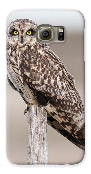 Short Eared Owl Galaxy S6 Case by Ian Hufton