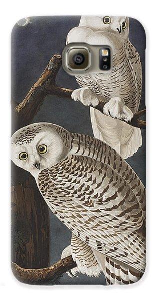 Snowy Owl Galaxy S6 Case by John James Audubon