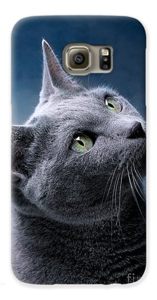 Russian Blue Cat Galaxy S6 Case by Nailia Schwarz