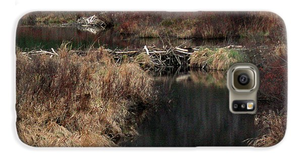 A Beaver's Work Galaxy S6 Case by Skip Willits