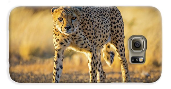 African Cheetah Galaxy S6 Case by Inge Johnsson