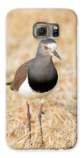 African Wattled Lapwing Vanellus Galaxy S6 Case by Panoramic Images