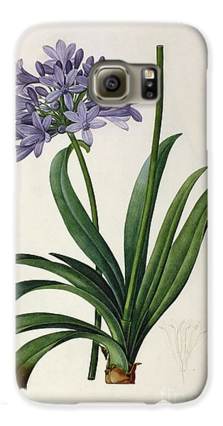 Agapanthus Umbrellatus Galaxy S6 Case by Pierre Redoute