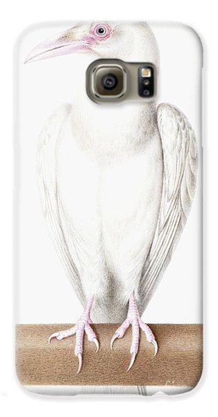 Albino Crow Galaxy S6 Case by Nicolas Robert