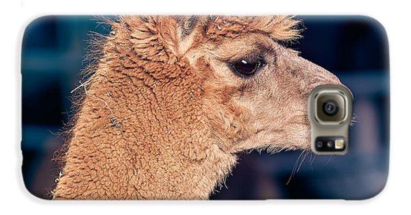 Alpaca Wants To Meet You Galaxy S6 Case by TC Morgan