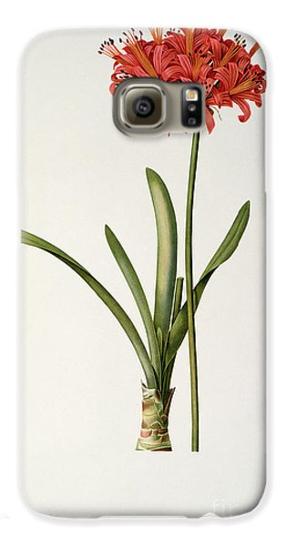 Amaryllis Curvifolia Galaxy S6 Case by Pierre Redoute