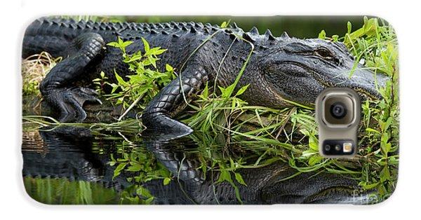 American Alligator In The Wild Galaxy S6 Case by Dustin K Ryan
