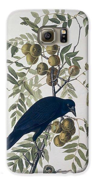 American Crow Galaxy S6 Case by John James Audubon