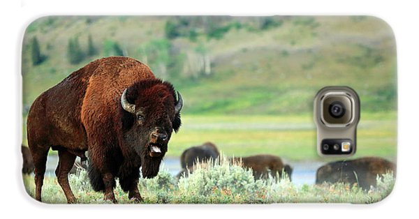 Angry Buffalo Galaxy S6 Case by Todd Klassy