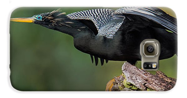 Anhinga Anhinga Anhinga, Costa Rica Galaxy S6 Case by Panoramic Images