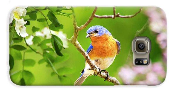 Beautiful Bluebird Galaxy S6 Case by Christina Rollo