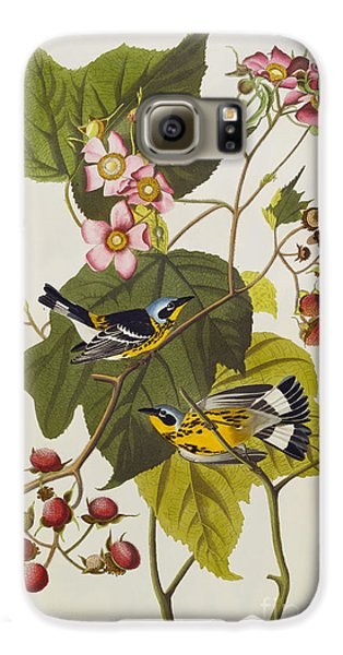 Black And Yellow Warbler Galaxy S6 Case by John James Audubon