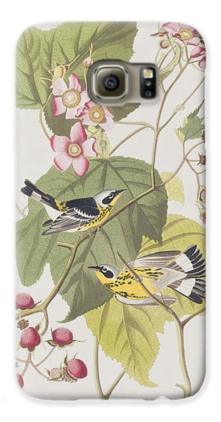 Black And Yellow Warblers Galaxy S6 Case by John James Audubon