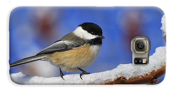 Black-capped Chickadee In Sumac Galaxy S6 Case by Tony Beck