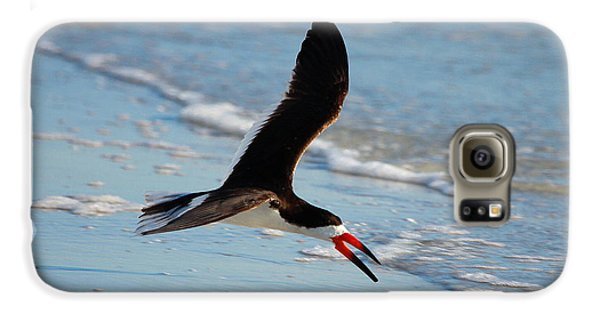 Black Skimmer Galaxy S6 Case by Barbara Bowen