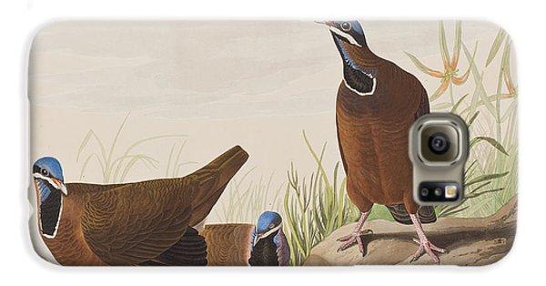 Blue Headed Pigeon Galaxy S6 Case by John James Audubon