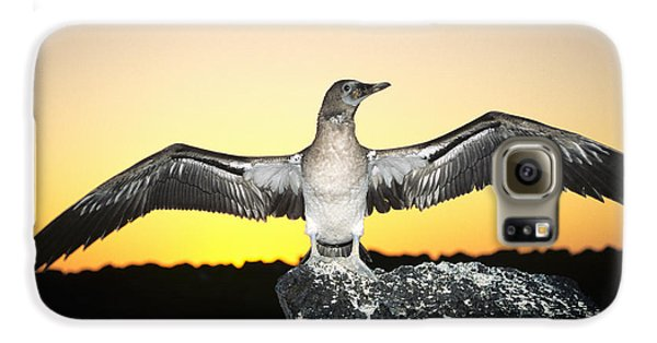 Booby At Sunset Galaxy S6 Case by Dave Fleetham - Printscapes