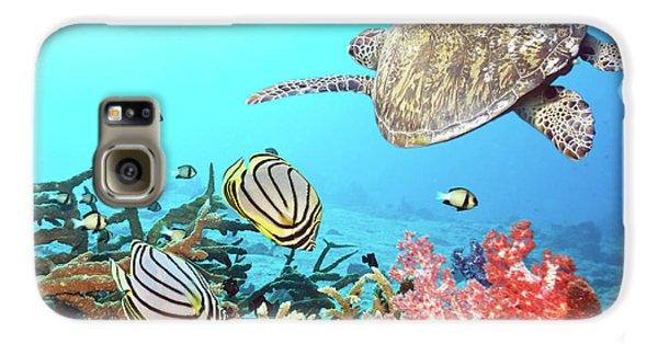 Butterflyfishes And Turtle Galaxy S6 Case by MotHaiBaPhoto Prints
