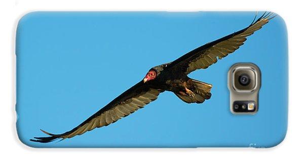 Buzzard Circling Galaxy S6 Case by Mike Dawson