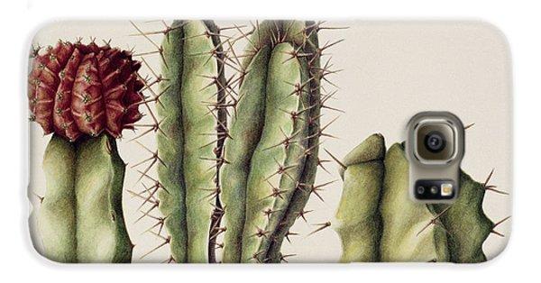 Cacti Galaxy S6 Case by Annabel Barrett