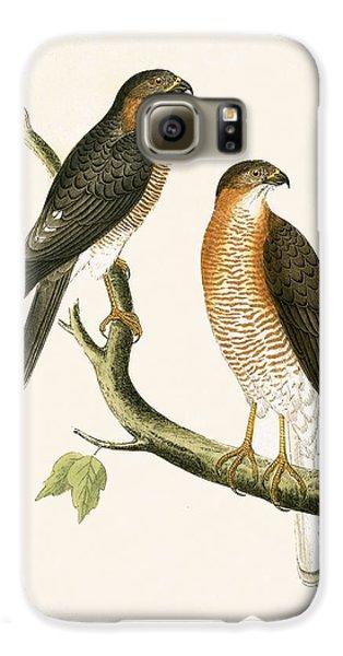 Calcutta Sparrow Hawk Galaxy S6 Case by English School