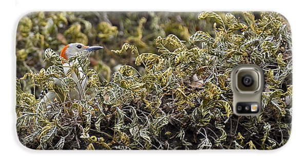 Camouflaged Red-bellied Woodpecker Galaxy S6 Case by Carolyn Marshall