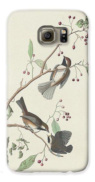 Canadian Titmouse Galaxy S6 Case by John James Audubon