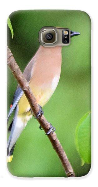Cedar Wax Wing Profile Galaxy S6 Case by Sheri McLeroy