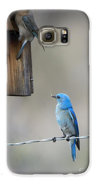 Checking The Nest Galaxy S6 Case by Mike Dawson