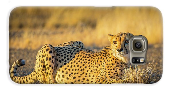 Cheetah Portrait Galaxy S6 Case by Inge Johnsson