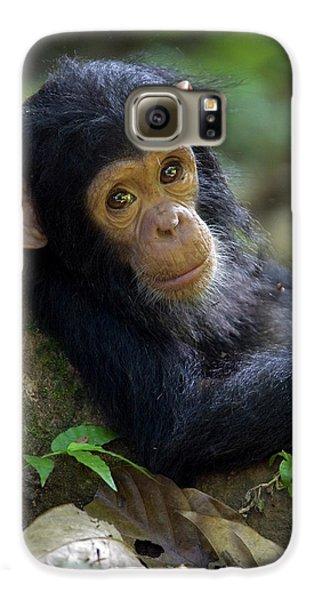Chimpanzee Pan Troglodytes Baby Leaning Galaxy S6 Case by Ingo Arndt
