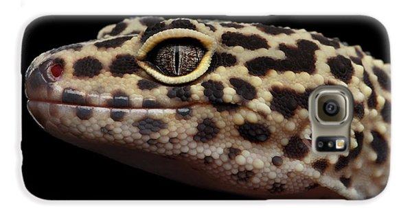 Close-up Leopard Gecko Eublepharis Macularius Isolated On Black Background Galaxy S6 Case by Sergey Taran
