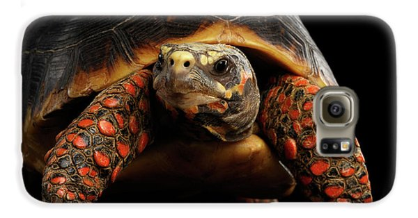 Close-up Of Red-footed Tortoises, Chelonoidis Carbonaria, Isolated Black Background Galaxy S6 Case by Sergey Taran