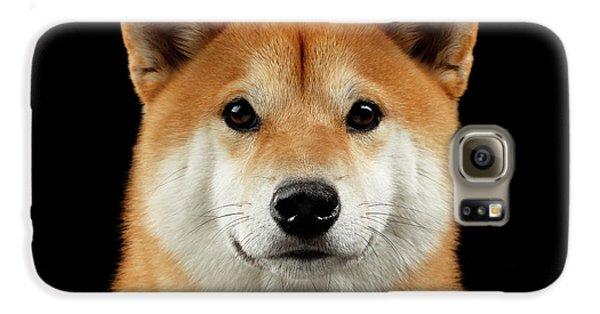 Close-up Portrait Of Head Shiba Inu Dog, Isolated Black Background Galaxy S6 Case by Sergey Taran