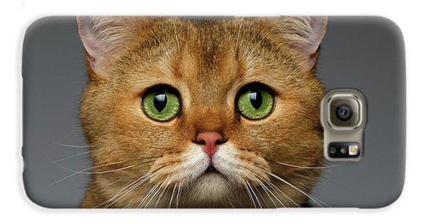 Closeup Golden British Cat With  Green Eyes On Gray Galaxy S6 Case by Sergey Taran