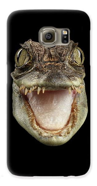 Closeup Head Of Young Cayman Crocodile , Reptile With Opened Mouth Isolated On Black Background, Fro Galaxy S6 Case by Sergey Taran
