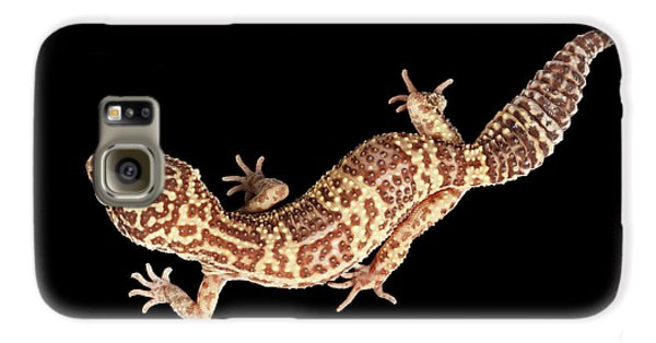 Closeup Leopard Gecko Eublepharis Macularius Isolated On Black Background Galaxy S6 Case by Sergey Taran