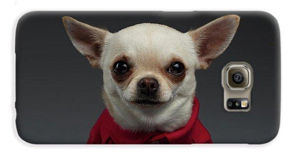 Closeup Portrait Chihuahua Dog In Stylish Clothes. Gray Background Galaxy S6 Case by Sergey Taran