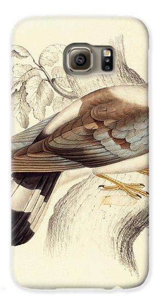 Columba Leuconota, Snow Pigeon Galaxy S6 Case by Elizabeth Gould