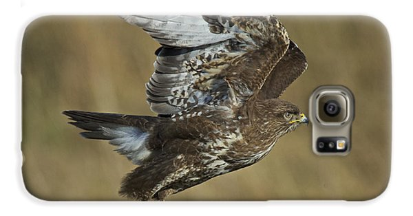Common Buzzard Galaxy S6 Case by Michael Durham/FLPA