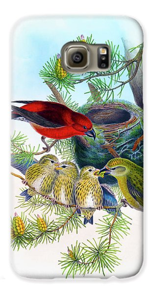 Common Crossbill Antique Bird Print John Gould Hc Richter Birds Of Great Britain  Galaxy S6 Case by Orchard Arts