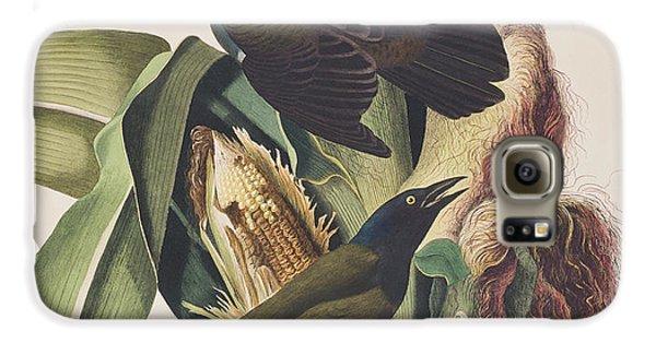 Common Crow Galaxy S6 Case by John James Audubon