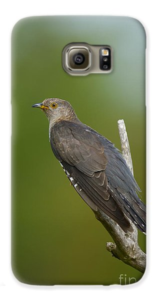 Common Cuckoo Galaxy S6 Case by Steen Drozd Lund