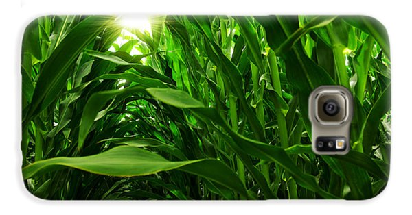 Corn Field Galaxy S6 Case by Carlos Caetano